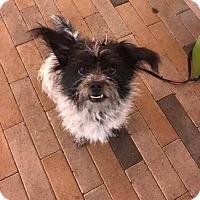 Adopt A Pet :: Nena - Monrovia, CA