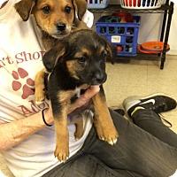 Adopt A Pet :: Emily & Spencer - Fair Oaks Ranch, TX