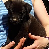 Adopt A Pet :: Spirit (6 lb) Video - Sussex, NJ