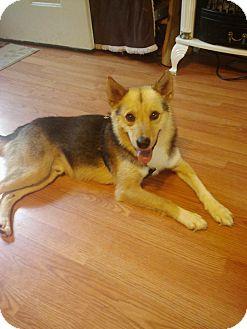 German Shepherd Dog Mix Dog for adoption in Hazard, Kentucky - Foster~Prison Obedience Traine