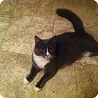Adopt A Pet :: Lacy - Chilhowie, VA