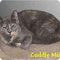 Adopt A Pet :: MIA - AUSTIN, TX