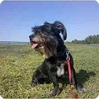 Adopt A Pet :: Missy - Winter Haven, FL