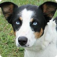 Adopt A Pet :: Clarabelle - Lancaster, OH