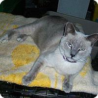 Adopt A Pet :: Twinkie - lake elsinore, CA