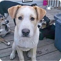 Adopt A Pet :: Chunky - Jacksonville, NC