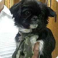 Adopt A Pet :: Levite - Hazard, KY