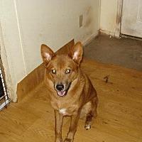 Adopt A Pet :: sedona - Tonopah, AZ