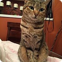 Adopt A Pet :: Olive - Alexandria, VA