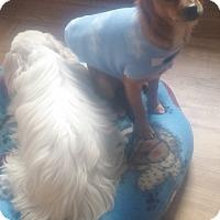 Adopt A Pet :: LOKI - New Windsor, NY