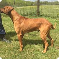 Adopt A Pet :: Decker - Seguin, TX
