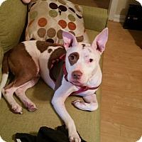 Adopt A Pet :: Pork Chop - Jacksonville, FL