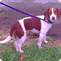 Adopt A Pet :: Rodeo - Metamora, IN