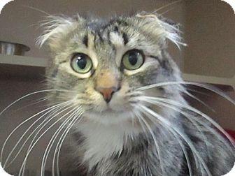 Domestic Mediumhair Cat for adoption in Lloydminster, Alberta - Joy