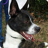 Adopt A Pet :: Ares - LaGrange, KY