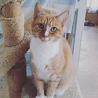 Adopt A Pet :: Cali 2 - Hampton, VA