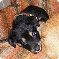 Adopt A Pet :: Lilly - Rigaud, QC