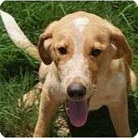 Adopt A Pet :: Tiana - Cumming, GA