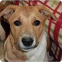 Adopt A Pet :: Piper - Raleigh, NC