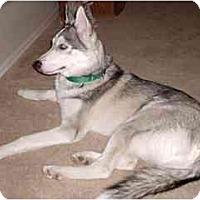 Adopt A Pet :: Koda - Courtesy Posting - Scottsdale, AZ