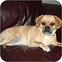 Adopt A Pet :: Phoebe - Rigaud, QC