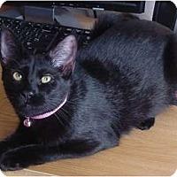Adopt A Pet :: Sammy - Franklin, NC