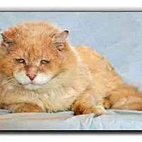 Adopt A Pet :: Lucky Bear - Howell, MI