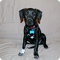 Adopt A Pet :: Betty - Austin, TX