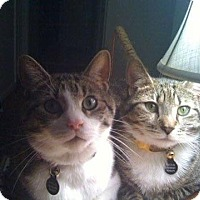 Adopt A Pet :: Hercules and Achilles - Harrison, NY