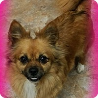 Adopt A Pet :: Diamond - Anaheim Hills, CA