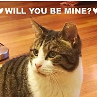 Adopt A Pet :: KINGSTON' - New York, NY