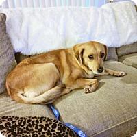 Adopt A Pet :: Tala - Pittsburg, CA