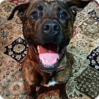 Adopt A Pet :: Gypsy ( courtesy post ) - simpsonville, SC