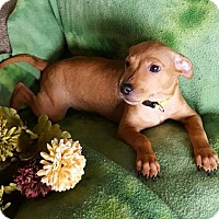 Adopt A Pet :: Newman - Sacramento, CA