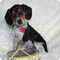 Adopt A Pet :: Ringo - Sioux Falls, SD