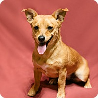 Adopt A Pet :: Hannah - Pueblo, CO