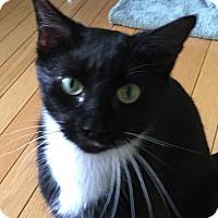 Adopt A Pet :: Amanda - Mount Pleasant, SC