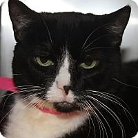 Adopt A Pet :: MINDY - Clayton, NJ