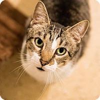 Adopt A Pet :: Shake N Bake-Fee Waived - Seville, OH