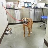 Adopt A Pet :: Rocco - Colfax, IL