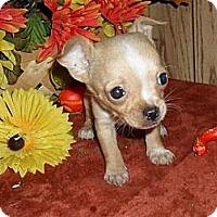 Adopt A Pet :: Pixie - Chandlersville, OH