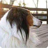 Adopt A Pet :: Buddy - Sterling, VA