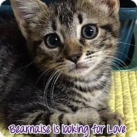 Adopt A Pet :: Burnaisse - Deerfield Beach, FL
