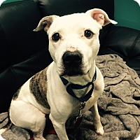 Adopt A Pet :: Ceeto - Nanuet, NY