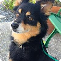 Adopt A Pet :: Hudson - Huntington Beach, CA