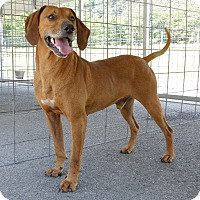 Adopt A Pet :: Red--RESCUED! - Marlinton, WV