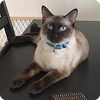 Adopt A Pet :: Busara - Merrifield, VA
