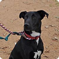 Adopt A Pet :: Dobby - Suwanee, GA