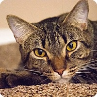 Adopt A Pet :: Bruno - Virginia Beach, VA