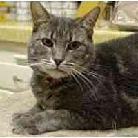 Adopt A Pet :: Stacy - Pasadena, CA
